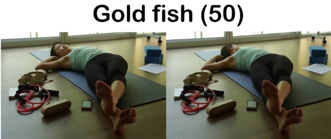 3goldfish